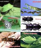 Cách diệt côn trùng trong nhà