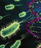Câu hỏi tốt nghiệp di truyền sinh học lớp 12