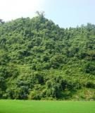 Hướng dẫn: Phương pháp giao đất giao rừng có sự tham gia của người dân