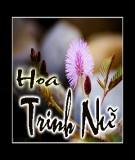 Truyện cổ tích: Hoa trinh nữ