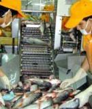 Xuất khẩu tôm và cá ba sa có tín hiệu khả quan