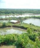 Bảo vệ môi trường trong nuôi trồng thủy sản ở Vĩnh Long