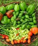 Các loại rau, củ, quả dùng để chữa bệnh