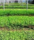 Cẩm nang trồng rau an toàn