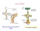 Cơ chế tổng hợp ADN