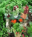 Kỹ thuật trồng cây cảnh ổn định trong chậu