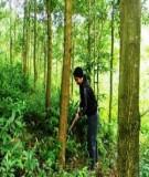 Hướng dẫn kỹ thuật trồng rừng keo lá tràm