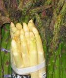 Kỹ thuật trồng rừng