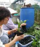 Phương pháp cấy mô/ Kỹ thuật nuôi trồng lan