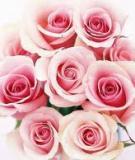Bông hồng cho tình đầu