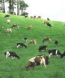 Những vấn đề cần quan tâm trong chăn nuôi bò thịt