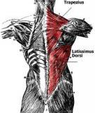 Chương 1. Nhập môn giải phẫu học