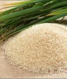 Quy trình sản xuất tinh bột gạo và bột dinh dưỡng