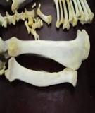 Bài giảng Giải phẫu Thú y - Chương I: Hệ xương (Nguyễn Bá Tiếp)