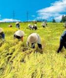 Những vấn đề chung về sản xuất nông nghiệp