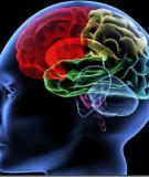 Chỉ số IQ và phương pháp xác định IQ