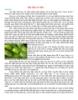 Dinh dưỡng đậu nành