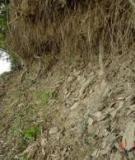 Tiểu luận: Thoái hóa đất do xói mòn, hậu quả và giải pháp
