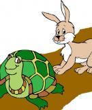 Bài học từ chuyện cổ tích Rùa và Thỏ