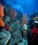 Bài giảng: Bảo tồn đa dạng sinh học
