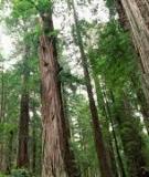 Cẩm nang ngành Lâm nghiệp_ Chương: Trồng rừng