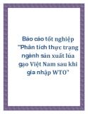 """Báo cáo tốt nghiệp """"Phân tích thực trạng  ngành sản xuất lúa gạo Việt Nam sau khi gia nhập WTO"""""""