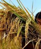 Chương 5  Phân tích tín dụng và cho vay nông nghiệp nông thôn