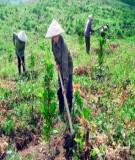 Giáo trình: Khoa học trồng và chăm sóc rừng