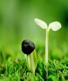 Bài tập Kinh tế tài nguyên môi trường (Có đáp án)