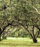 Bệnh cây chuyên khoa - Chương 2