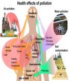 Kim loại nặng trong môi trường đất