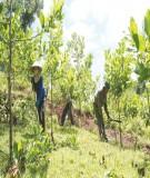 Giáo trình trồng rừng - Chương 2