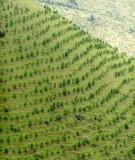 Giáo trình trồng rừng - Chương 1
