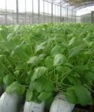 Nghiên cứu khoa học-phương pháp mô hình nông lâm kết hợp