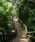Kỹ thuật lâm sinh đơn giản cho quản lý rừng