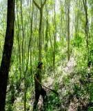 Bảo vệ rừng - Thực trạng và những giải pháp