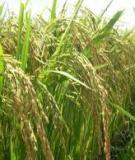 Biện pháp canh tác phòng chống sâu bệnh và cỏ dại trong nông nghiệp
