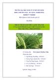 """Tiểu luận """"Phân tích lợi thế cạnh tranh của sản phẩm gạo Việt Nam sang thị trường Philippines"""""""