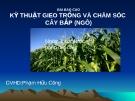 """Báo cáo """"Kỹ thuật gieo trồng và chăm sóc cây bắp (Ngô)"""