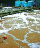 Tiểu luận: Xử lý nước thải trong chăn nuôi bằng công nghệ Biogas