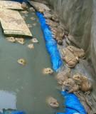 Kỹ thuật sản xuất giống và nuôi ếch