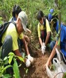Bài giảng về trồng rừng phòng hộ