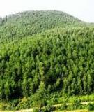Kinh nghiệm trồng rừng keo lai