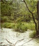 Hệ sinh thái rừng