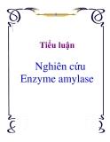 Tiểu luận: Nghiên cứu Enzyme amylase