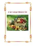 Dinh dưỡng và thực phẩm: Các loại trái cây