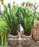 Qui hoạch và thiết kế vườn ươm để trồng cây cảnh