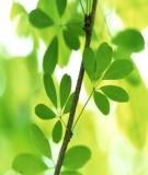 Nghiên cứu hình thái giải phẩu thực vật
