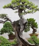 Kỹ thuật trồng bonsai cơ bản