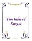 Tìm hiểu về Enzym